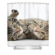 Kitten Companions Shower Curtain