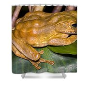 Marsupial Frog Shower Curtain