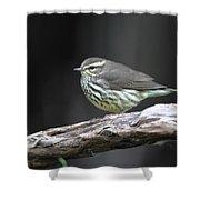 Northern Waterthrush Shower Curtain