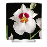 Orchid Flower Shower Curtain