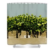 Photoperiodicity In Soybean Plants Shower Curtain by Science Source