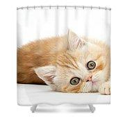 Playful Kitten Shower Curtain