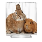 Rabbit And Guinea Pig Shower Curtain
