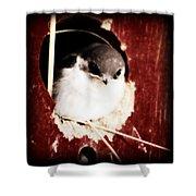 Red Barn Birdie Shower Curtain