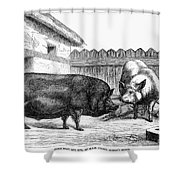 Swine, 19th Century Shower Curtain