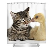 Tabby Kitten With Yellow Gosling Shower Curtain