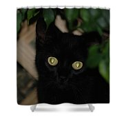 5- Transfixed Shower Curtain
