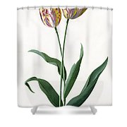 5 Tulip Tulip  Shower Curtain