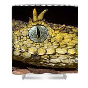 Usambara Eyelash Bush Viper Shower Curtain