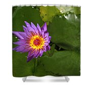 Waterlily Opening Part Of A Series Shower Curtain