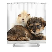 Yorkipoo Pup With Guinea Pig Shower Curtain