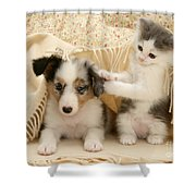 Kitten And Pup Shower Curtain