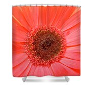 5324-001 Shower Curtain