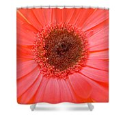 5324-002 Shower Curtain