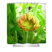 5352c Shower Curtain