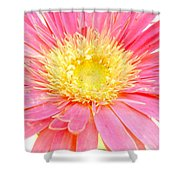 5436c1-004 Shower Curtain