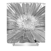 5440c4 Shower Curtain