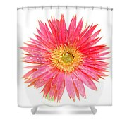 5466pn Shower Curtain