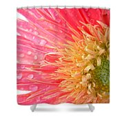 54793c Shower Curtain