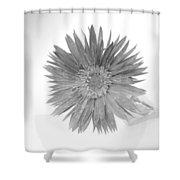 5486c1 Shower Curtain
