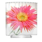 5491c1 Shower Curtain