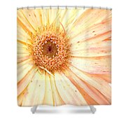 5517c2 Shower Curtain