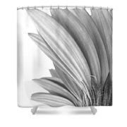 5570c3 Shower Curtain