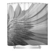 5572-2-002 Shower Curtain