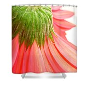 5572c Shower Curtain
