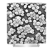 Methicillin-resistant Staphylococcus Shower Curtain