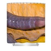 Congo Caecilian Shower Curtain