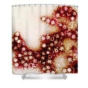 Coxsackie B4 Virus, Tem Shower Curtain