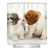 Dog And Cat Shower Curtain by Jane Burton