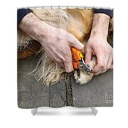 Dog Grooming Shower Curtain