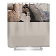 Elephant Seal Colony On Big Sur  Shower Curtain