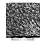 Gecko Foot Pads Shower Curtain