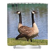 Goose Shower Curtain