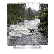 Grizzly Bear Ursus Arctos Horribilis Shower Curtain