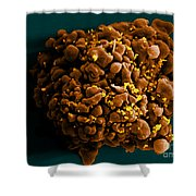 Hiv-infected H9 T Cell, Sem Shower Curtain by Science Source