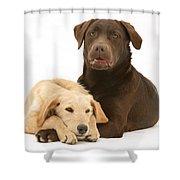 Labradoodle And Labrador Retriever Shower Curtain by Jane Burton