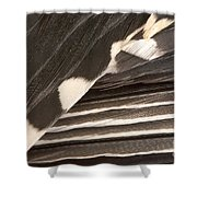 Red-bellied Woodpecker Feathers Shower Curtain