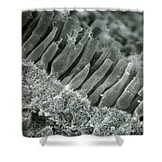 Rods And Cones In Retina Shower Curtain by Omikron