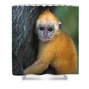 Silvered Leaf Monkey Trachypithecus Shower Curtain
