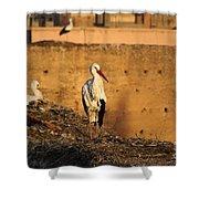 Storks In Marrakech Shower Curtain