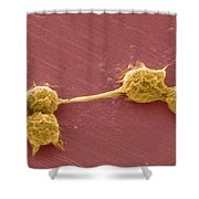 Water Biofilm With H. Vermiformis Cysts Shower Curtain