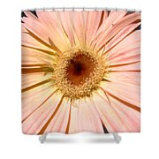 6195c1 Shower Curtain
