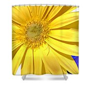6387c Shower Curtain