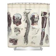 Anatomie Methodique Illustrations Shower Curtain