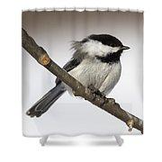 Blackcapped Chickadee Shower Curtain