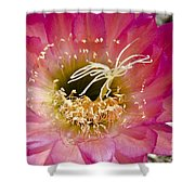 Dark Pink Cactus Flower Shower Curtain